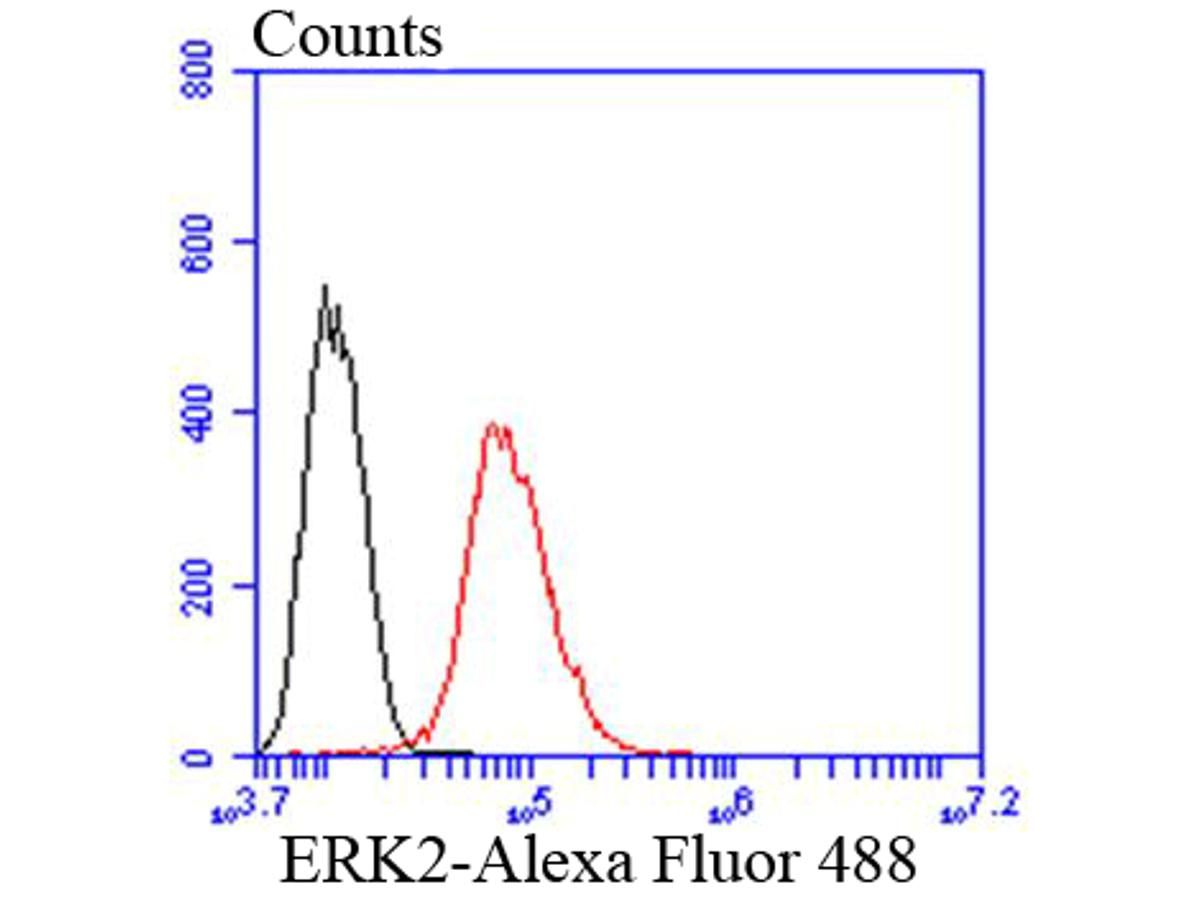 Flow cytometric analysis of ERK2 was done on Hela cells. The cells were fixed, permeabilized and stained with the primary antibody (ET1603-23, 1/50) (red). After incubation of the primary antibody at room temperature for an hour, the cells were stained with a Alexa Fluor 488-conjugated Goat anti-Rabbit IgG Secondary antibody at 1/1000 dilution for 30 minutes.Unlabelled sample was used as a control (cells without incubation with primary antibody; black).