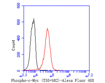 Flow cytometric analysis of Phospho-c-Myc (T58+S62) was done on K562 cells. The cells were fixed, permeabilized and stained with the primary antibody (ET1603-24, 1/50) (red). After incubation of the primary antibody at room temperature for an hour, the cells were stained with a Alexa Fluor 488-conjugated Goat anti-Rabbit IgG Secondary antibody at 1/1000 dilution for 30 minutes.Unlabelled sample was used as a control (cells without incubation with primary antibody; black).