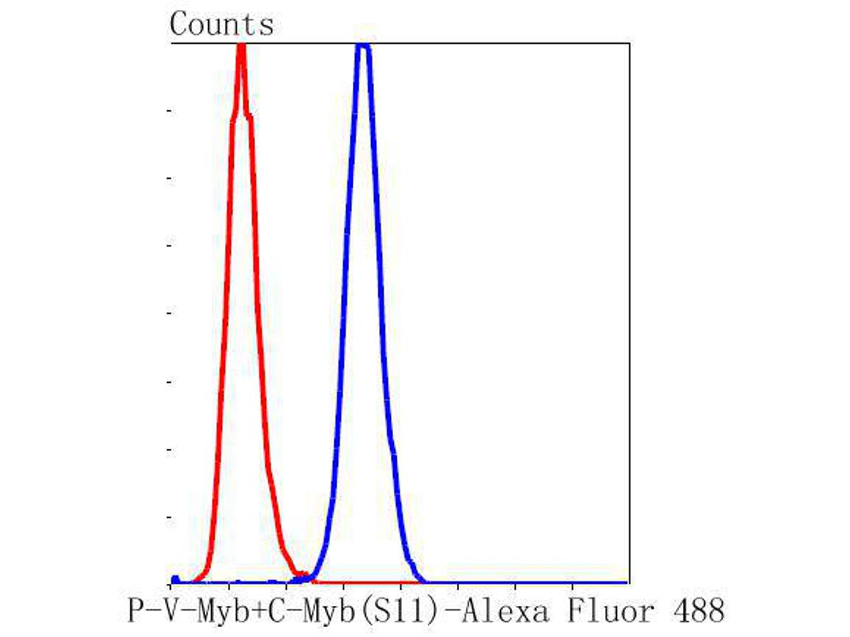 Flow cytometric analysis of MCF-7 cells with P-V-Myb+C-Myb(S11) antibody at 1/50 dilution (blue) compared with an unlabelled control (cells without incubation with primary antibody; red). Alexa Fluor 488-conjugated goat anti rabbit IgG was used as antibody