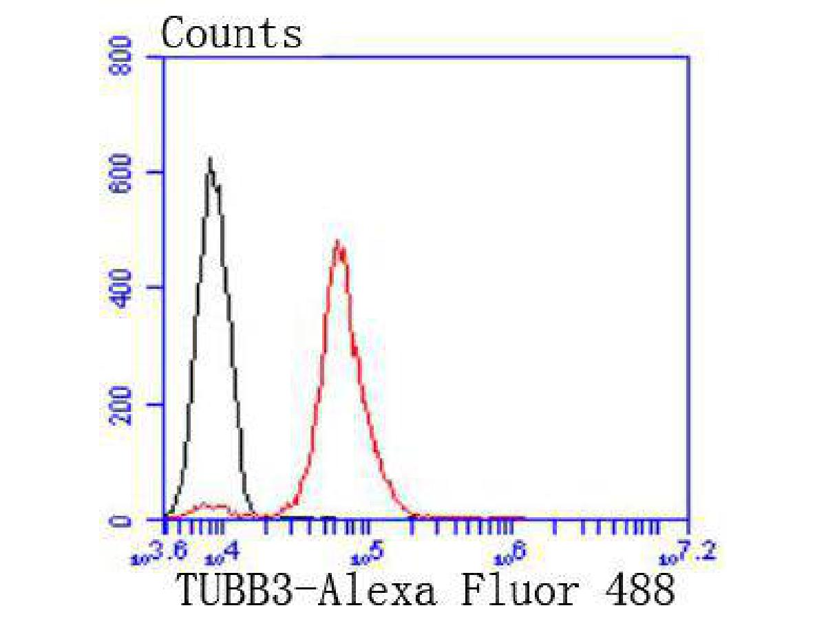 Flow cytometric analysis of Tubulin beta-III was done on N2A cells. The cells were fixed, permeabilized and stained with the primary antibody (ET1604-17, 1/50) (red). After incubation of the primary antibody at room temperature for an hour, the cells were stained with a Alexa Fluor 488-conjugated Goat anti-Rabbit IgG Secondary antibody at 1/1000 dilution for 30 minutes.Unlabelled sample was used as a control (cells without incubation with primary antibody; black).