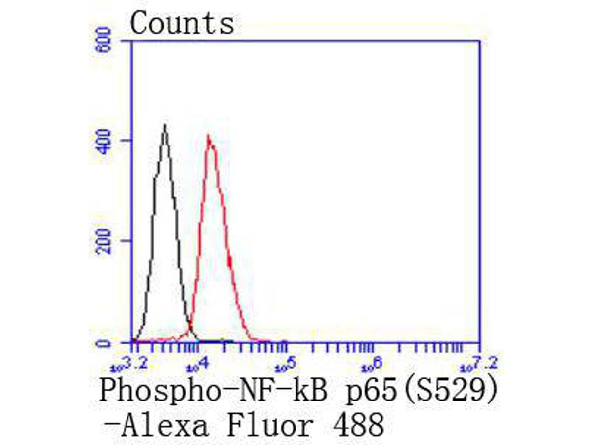 Flow cytometric analysis of Phospho-NF-kB p65(S529) was done on Daudi cells. The cells were fixed, permeabilized and stained with the primary antibody (ET1604-27, 1/50) (red). After incubation of the primary antibody at room temperature for an hour, the cells were stained with a Alexa Fluor 488-conjugated Goat anti-Rabbit IgG Secondary antibody at 1/1000 dilution for 30 minutes.Unlabelled sample was used as a control (cells without incubation with primary antibody; black).