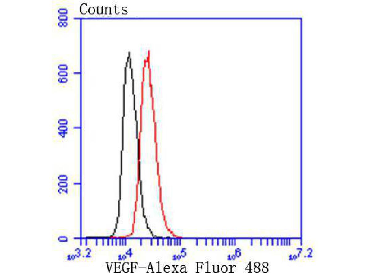 Flow cytometric analysis of VEGF was done on Hela cells. The cells were fixed, permeabilized and stained with the primary antibody (ET1604-28, 1/50) (red). After incubation of the primary antibody at room temperature for an hour, the cells were stained with a Alexa Fluor 488-conjugated Goat anti-Rabbit IgG Secondary antibody at 1/1000 dilution for 30 minutes.Unlabelled sample was used as a control (cells without incubation with primary antibody; black).