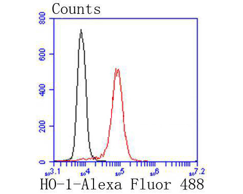 Flow cytometric analysis of Heme Oxygenase 1(HO-1) was done on Jurkat cells. The cells were fixed, permeabilized and stained with the primary antibody (ET1604-45, 1/50) (red). After incubation of the primary antibody at room temperature for an hour, the cells were stained with a Alexa Fluor 488-conjugated Goat anti-Rabbit IgG Secondary antibody at 1/1000 dilution for 30 minutes.Unlabelled sample was used as a control (cells without incubation with primary antibody; black).