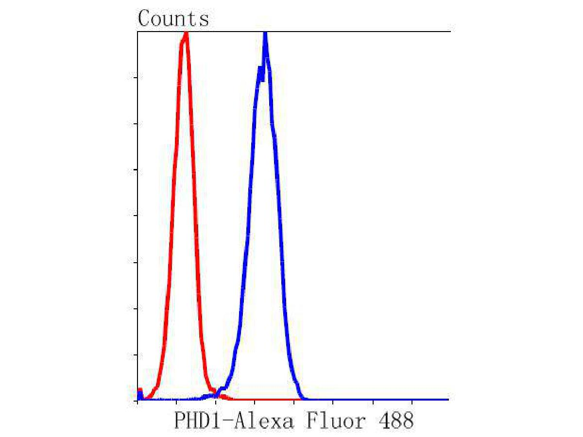 Flow cytometric analysis of Hela cells with PHD1 antibody at 1/50 dilution (blue) compared with an unlabelled control (cells without incubation with primary antibody; red). Alexa Fluor 488-conjugated goat anti rabbit IgG was used as the secondary antibody.