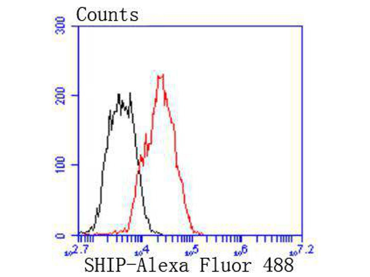 Flow cytometric analysis of SHIP was done on Raji cells. The cells were fixed, permeabilized and stained with the primary antibody (ET1605-30, 1/50) (red). After incubation of the primary antibody at room temperature for an hour, the cells were stained with a Alexa Fluor 488-conjugated Goat anti-Rabbit IgG Secondary antibody at 1/1000 dilution for 30 minutes.Unlabelled sample was used as a control (cells without incubation with primary antibody; black).