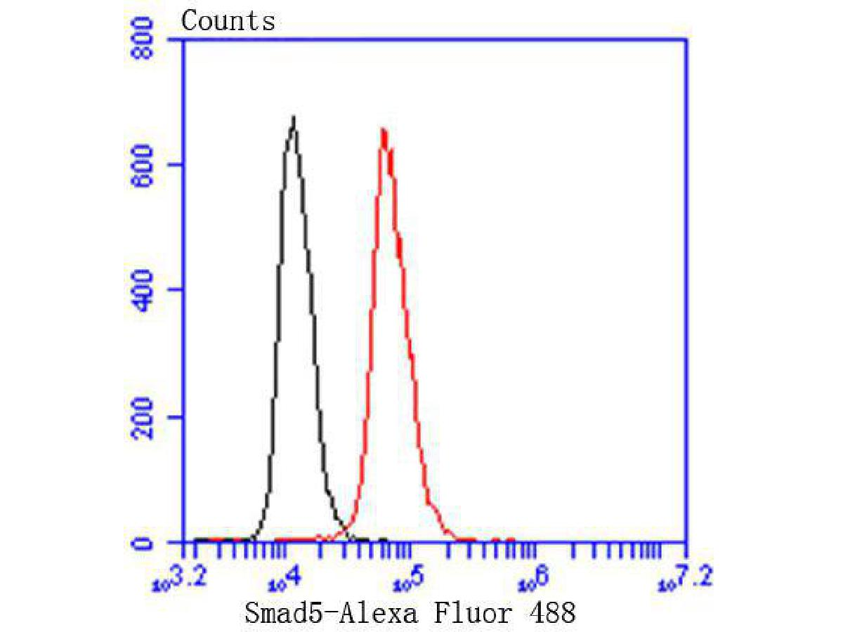 Flow cytometric analysis of Smad5 was done on Hela cells. The cells were fixed, permeabilized and stained with the primary antibody (ET1606-26, 1/50) (red). After incubation of the primary antibody at room temperature for an hour, the cells were stained with a Alexa Fluor 488-conjugated Goat anti-Rabbit IgG Secondary antibody at 1/1000 dilution for 30 minutes.Unlabelled sample was used as a control (cells without incubation with primary antibody; black).