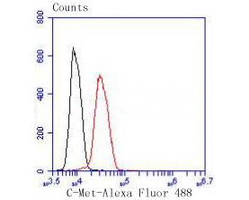 Flow cytometric analysis of Met(C-Met) was done on Hela cells. The cells were fixed, permeabilized and stained with the primary antibody (ET1606-45, 1/50) (red). After incubation of the primary antibody at room temperature for an hour, the cells were stained with a Alexa Fluor 488-conjugated Goat anti-Rabbit IgG Secondary antibody at 1/1000 dilution for 30 minutes.Unlabelled sample was used as a control (cells without incubation with primary antibody; black).