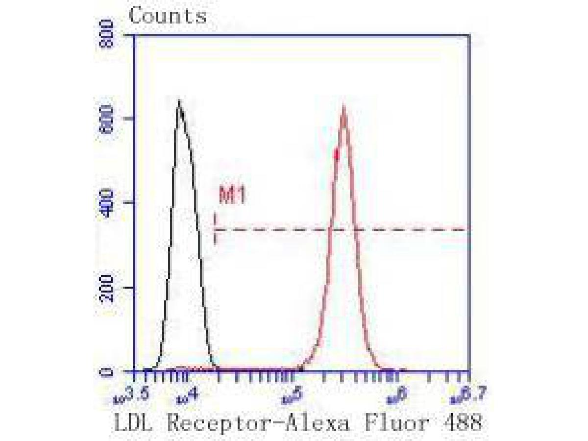 Flow cytometric analysis of Hela cells with LDL Receptor antibody at 1/50 dilution (red) compared with an unlabelled control (cells without incubation with primary antibody; black). Alexa Fluor 488-conjugated goat anti rabbit IgG was used as the secondary antibody.