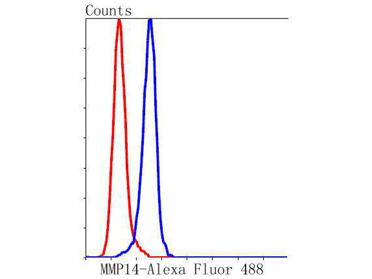 Flow cytometric analysis of MMP14 was done on A549 cells. The cells were fixed, permeabilized and stained with the primary antibody (ET1606-48, 1/50) (blue). After incubation of the primary antibody at room temperature for an hour, the cells were stained with a Alexa Fluor 488-conjugated Goat anti-Rabbit IgG Secondary antibody at 1/1000 dilution for 30 minutes.Unlabelled sample was used as a control (cells without incubation with primary antibody; red).
