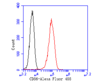 Flow cytometric analysis of CD86 was done on Raji cells. The cells were fixed, permeabilized and stained with the primary antibody (ET1606-50, 1/50) (red). After incubation of the primary antibody at room temperature for an hour, the cells were stained with a Alexa Fluor 488-conjugated Goat anti-Rabbit IgG Secondary antibody at 1/1000 dilution for 30 minutes.Unlabelled sample was used as a control (cells without incubation with primary antibody; black).