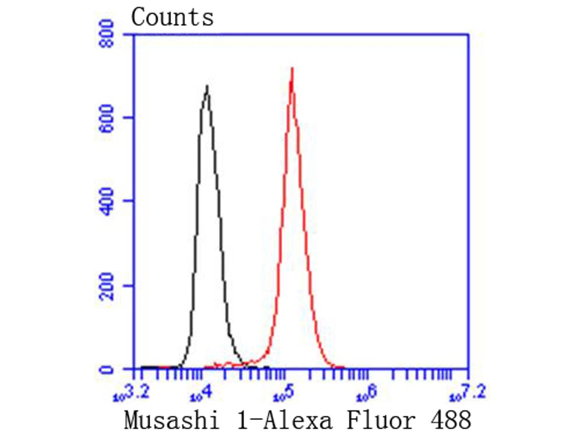 Flow cytometric analysis of Musashi 1 was done on Hela cells. The cells were fixed, permeabilized and stained with the primary antibody (ET1606-51, 1/50) (red). After incubation of the primary antibody at room temperature for an hour, the cells were stained with a Alexa Fluor 488-conjugated Goat anti-Rabbit IgG Secondary antibody at 1/1000 dilution for 30 minutes.Unlabelled sample was used as a control (cells without incubation with primary antibody; black).