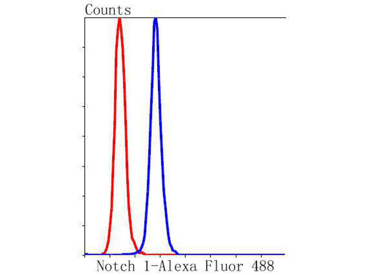 Flow cytometric analysis of Notch 1 was done on Hela cells. The cells were fixed, permeabilized and stained with the primary antibody (ET1606-55, 1/50) (blue). After incubation of the primary antibody at room temperature for an hour, the cells were stained with a Alexa Fluor 488-conjugated Goat anti-Rabbit IgG Secondary antibody at 1/1000 dilution for 30 minutes.Unlabelled sample was used as a control (cells without incubation with primary antibody; red).