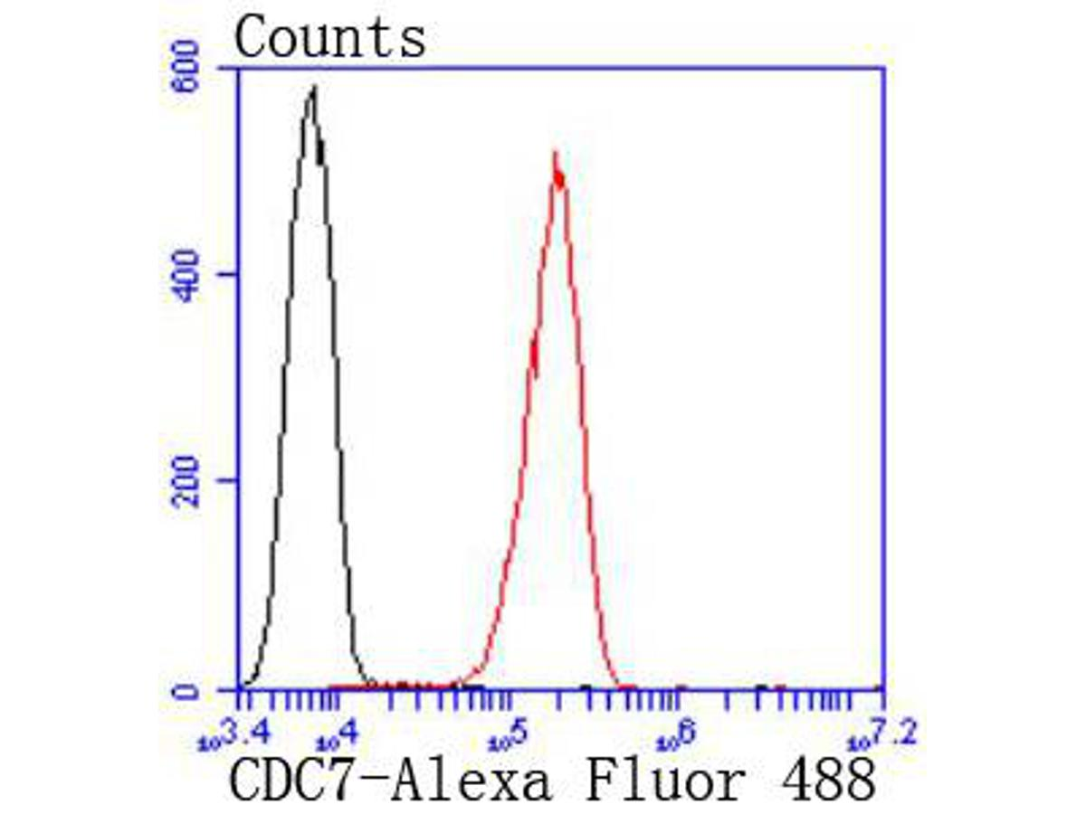 Flow cytometric analysis of A431 cells with CDC7 Kinase antibody at 1/50 dilution (red) compared with an unlabelled control (cells without incubation with primary antibody; black). Alexa Fluor 488-conjugated goat anti rabbit IgG was used as the secondary antibody.
