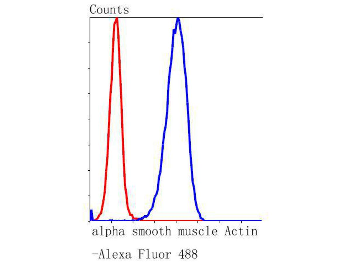 Flow cytometric analysis of alpha smooth muscle Actin was done on Hela cells. The cells were fixed, permeabilized and stained with the primary antibody (ET1607-43, 1/50) (blue). After incubation of the primary antibody at room temperature for an hour, the cells were stained with a Alexa Fluor 488-conjugated Goat anti-Rabbit IgG Secondary antibody at 1/1000 dilution for 30 minutes.Unlabelled sample was used as a control (cells without incubation with primary antibody; red).