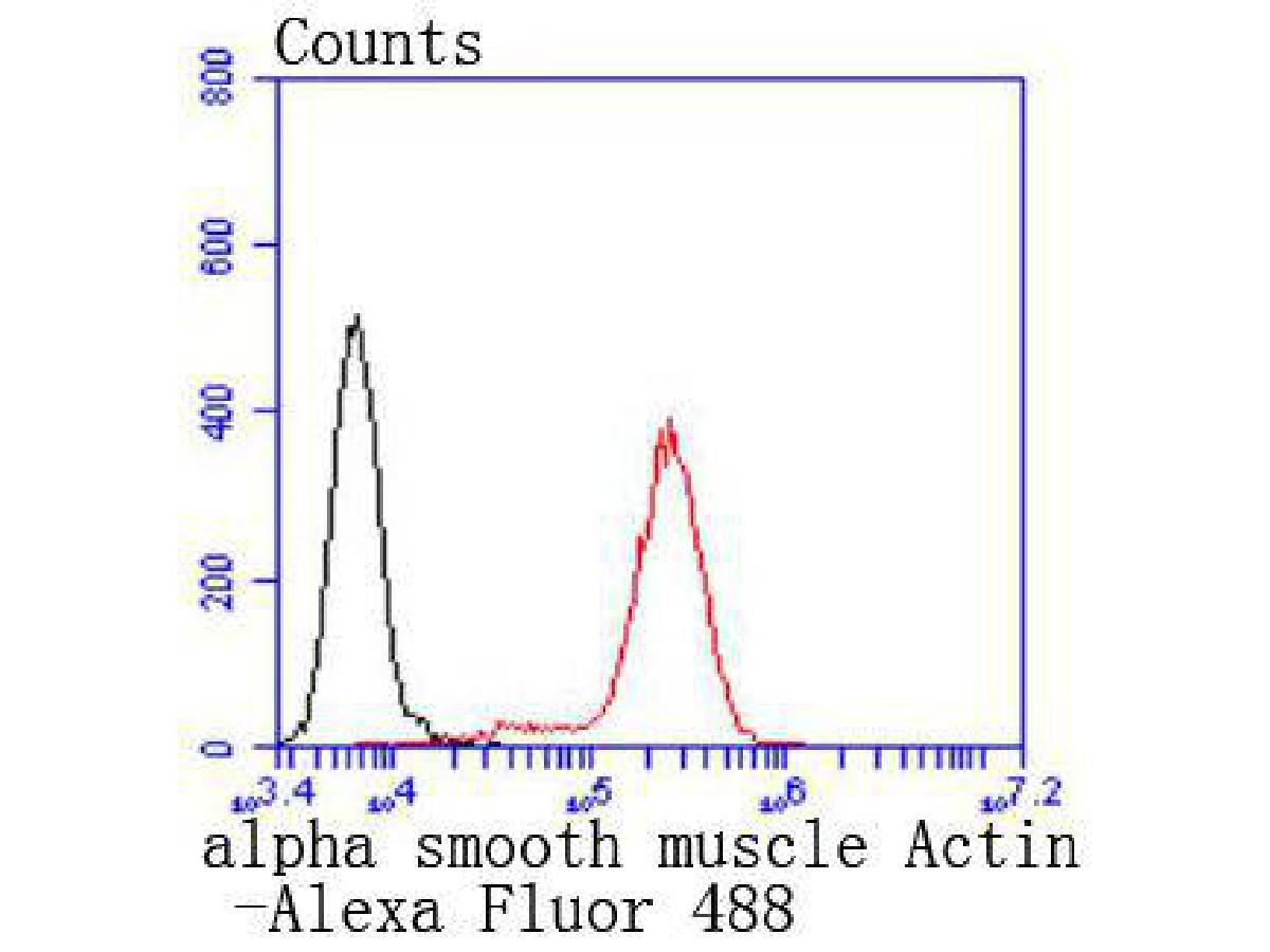 Flow cytometric analysis of alpha smooth muscle Actin was done on Jurkat cells. The cells were fixed, permeabilized and stained with the primary antibody (ET1607-53, 1/50) (red). After incubation of the primary antibody at room temperature for an hour, the cells were stained with a Alexa Fluor 488-conjugated Goat anti-Rabbit IgG Secondary antibody at 1/1000 dilution for 30 minutes.Unlabelled sample was used as a control (cells without incubation with primary antibody; black).