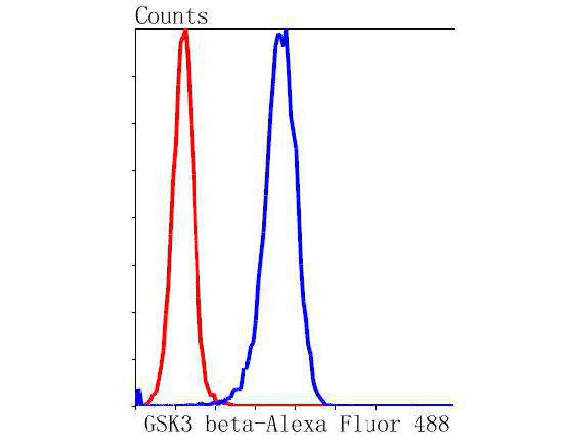 Flow cytometric analysis of GSK3 beta was done on Hela cells. The cells were fixed, permeabilized and stained with the primary antibody (ET1607-71, 1/50) (blue). After incubation of the primary antibody at room temperature for an hour, the cells were stained with a Alexa Fluor 488-conjugated Goat anti-Rabbit IgG Secondary antibody at 1/1000 dilution for 30 minutes.Unlabelled sample was used as a control (cells without incubation with primary antibody; red).