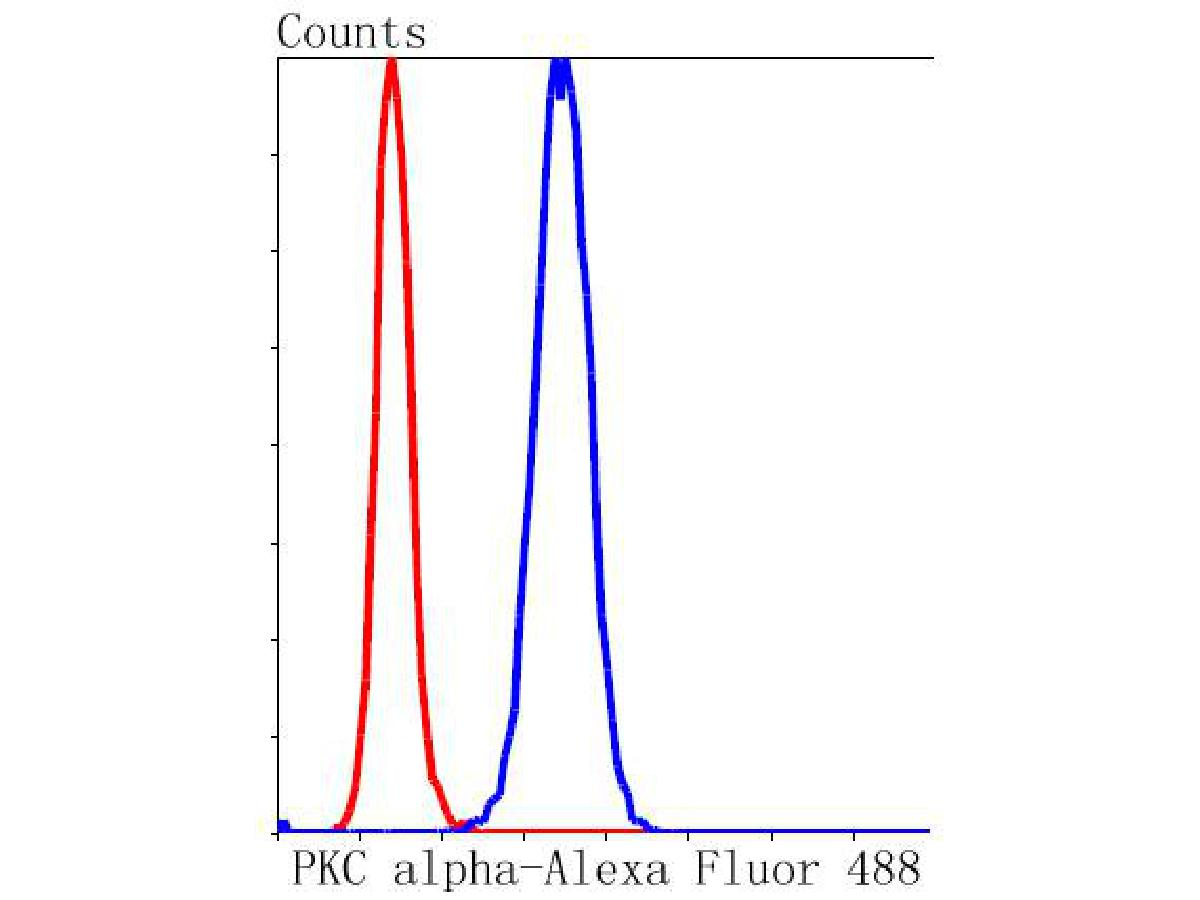 Flow cytometric analysis of Hela cells with PKC alpha antibody at 1/50 dilution (blue) compared with an unlabelled control (cells without incubation with primary antibody; red). Alexa Fluor 488-conjugated goat anti rabbit IgG was used as the secondary antibody.