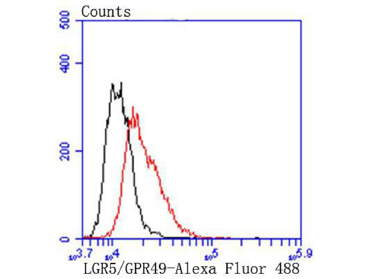 Flow cytometric analysis of LGR5/GPR49 was done on SH-SY5Y cells. The cells were fixed, permeabilized and stained with the primary antibody (ET1608-18, 1/50) (red). After incubation of the primary antibody at room temperature for an hour, the cells were stained with a Alexa Fluor 488-conjugated Goat anti-Rabbit IgG Secondary antibody at 1/1000 dilution for 30 minutes.Unlabelled sample was used as a control (cells without incubation with primary antibody; black).