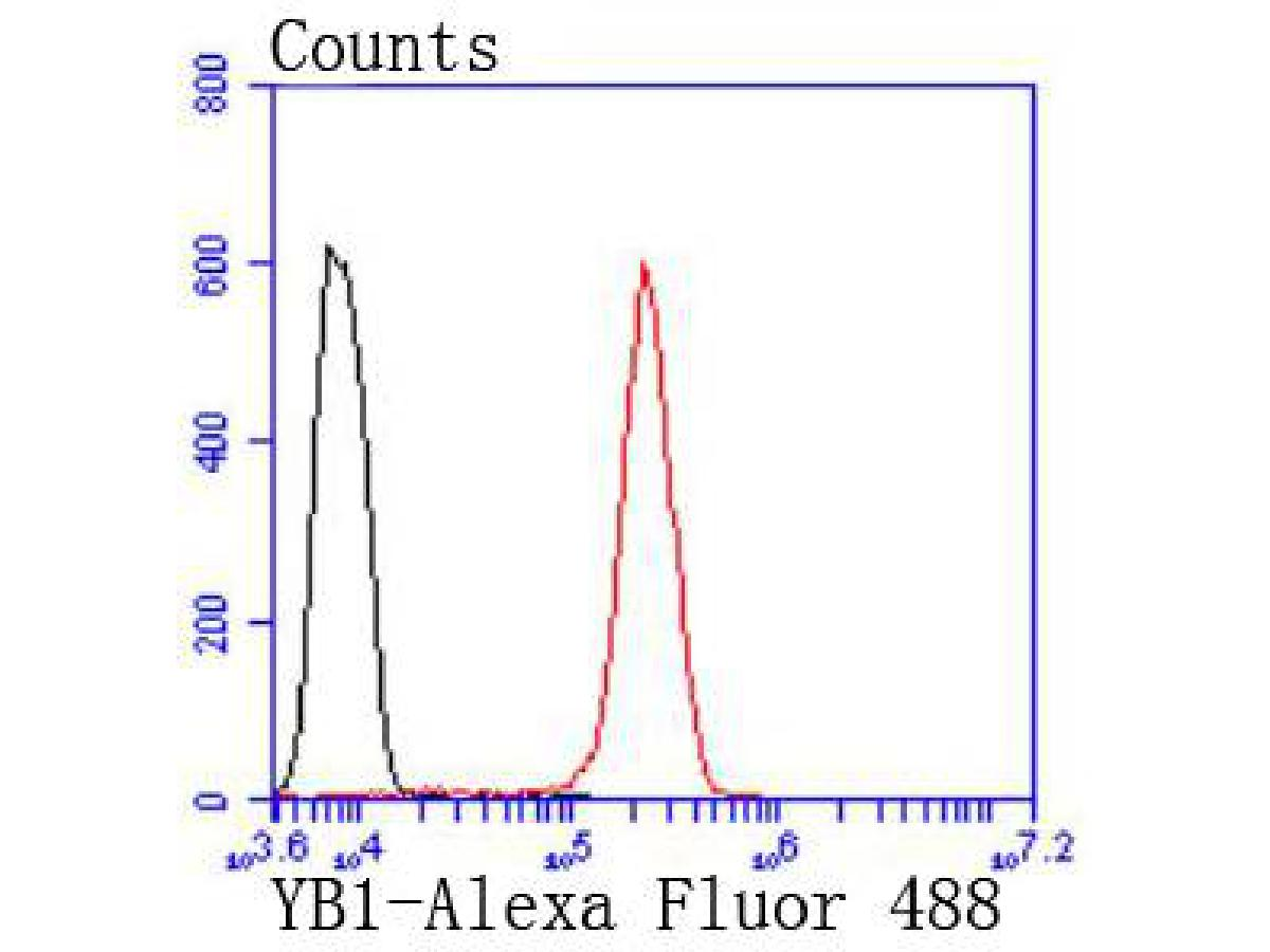 Flow cytometric analysis of Hela cells with YB1 antibody at 1/50 dilution (red) compared with an unlabelled control (cells without incubation with primary antibody; black). Alexa Fluor 488-conjugated goat anti rabbit IgG was used as the secondary antibody.