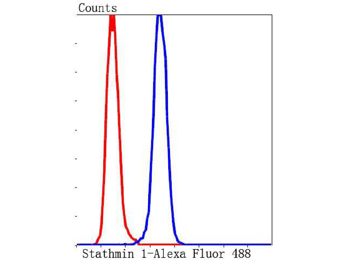 Flow cytometric analysis of Hela cells with Stathmin 1 antibody at 1/50 dilution (blue) compared with an unlabelled control (cells without incubation with primary antibody; red). Alexa Fluor 488-conjugated goat anti rabbit IgG was used as the secondary antibody.