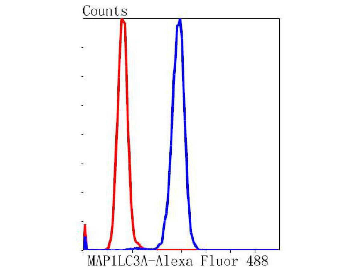 Flow cytometric analysis of MAP1LC3A was done on SH-SY5Y cells. The cells were fixed, permeabilized and stained with the primary antibody (ET1609-26, 1/50) (blue). After incubation of the primary antibody at room temperature for an hour, the cells were stained with a Alexa Fluor 488-conjugated Goat anti-Rabbit IgG Secondary antibody at 1/1000 dilution for 30 minutes.Unlabelled sample was used as a control (cells without incubation with primary antibody; red).