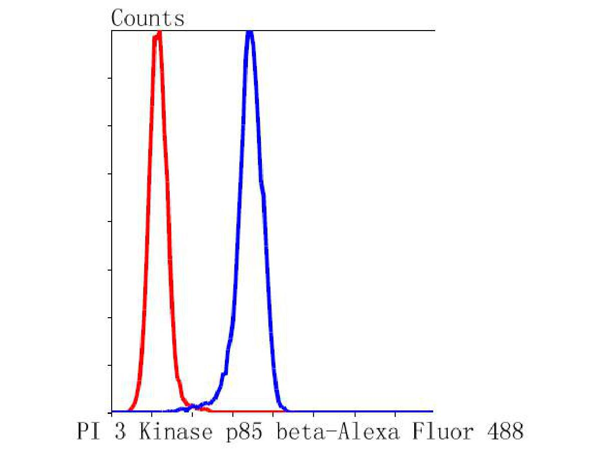Flow cytometric analysis of PI 3 Kinase p85 beta was done on Hela cells. The cells were fixed, permeabilized and stained with the primary antibody (ET1609-30, 1/50) (blue). After incubation of the primary antibody at room temperature for an hour, the cells were stained with a Alexa Fluor 488-conjugated Goat anti-Rabbit IgG Secondary antibody at 1/1000 dilution for 30 minutes.Unlabelled sample was used as a control (cells without incubation with primary antibody; red).