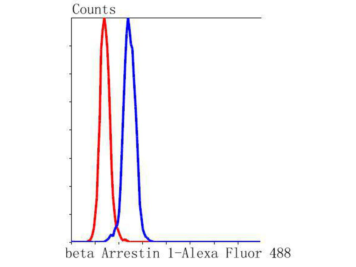 Flow cytometric analysis of beta Arrestin 1 was done on Hela cells. The cells were fixed, permeabilized and stained with the primary antibody (ET1609-38, 1/50) (blue). After incubation of the primary antibody at room temperature for an hour, the cells were stained with a Alexa Fluor 488-conjugated Goat anti-Rabbit IgG Secondary antibody at 1/1000 dilution for 30 minutes.Unlabelled sample was used as a control (cells without incubation with primary antibody; red).