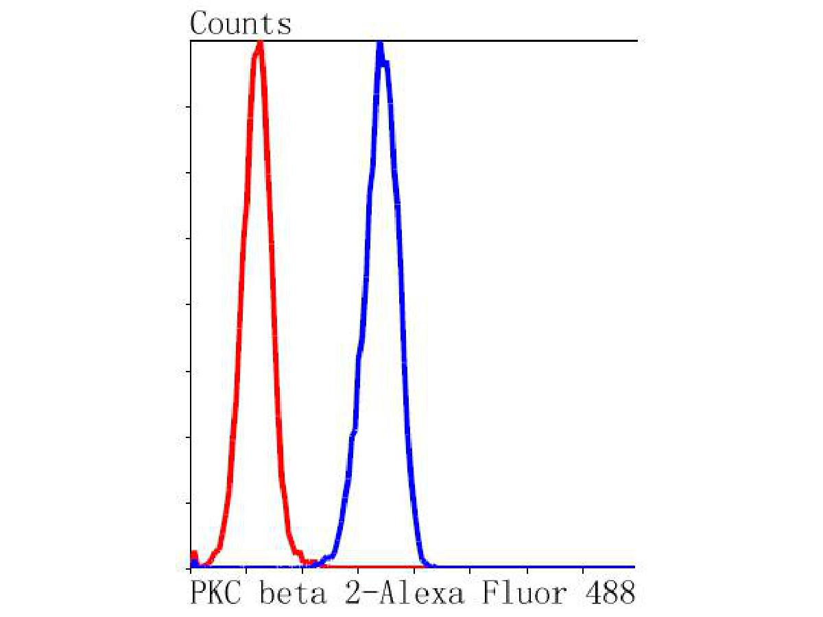 Flow cytometric analysis of PKC beta 2 was done on Hela cells. The cells were fixed, permeabilized and stained with the primary antibody (ET1609-44, 1/50) (blue). After incubation of the primary antibody at room temperature for an hour, the cells were stained with a Alexa Fluor 488-conjugated Goat anti-Rabbit IgG Secondary antibody at 1/1000 dilution for 30 minutes.Unlabelled sample was used as a control (cells without incubation with primary antibody; red).