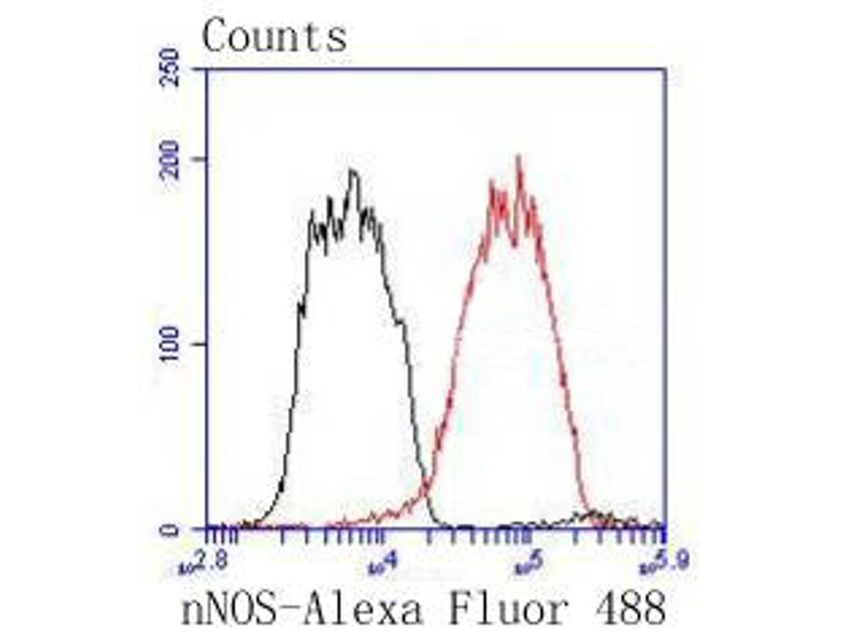 Flow cytometric analysis of nNOS was done on PC-12 cells. The cells were fixed, permeabilized and stained with the primary antibody (ET1609-61, 1/100) (red). After incubation of the primary antibody at room temperature for an hour, the cells were stained with a Alexa Fluor 488-conjugated Goat anti-Rabbit IgG Secondary antibody at 1/1000 dilution for 30 minutes.Unlabelled sample was used as a control (cells without incubation with primary antibody; black).