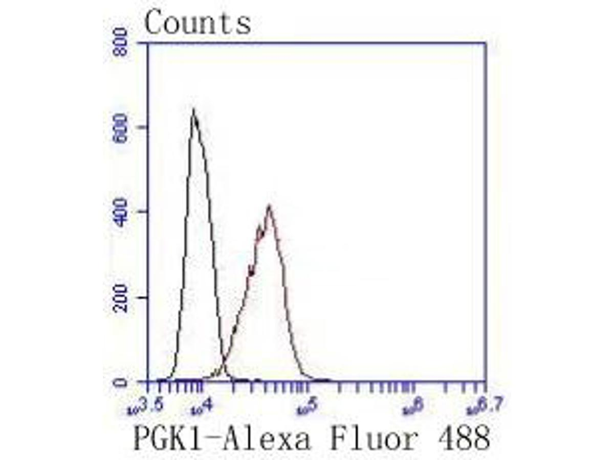 Flow cytometric analysis of PGK1 was done on Hela cells. The cells were fixed, permeabilized and stained with the primary antibody (ET1609-63, 1/50) (red). After incubation of the primary antibody at room temperature for an hour, the cells were stained with a Alexa Fluor 488-conjugated Goat anti-Rabbit IgG Secondary antibody at 1/1000 dilution for 30 minutes.Unlabelled sample was used as a control (cells without incubation with primary antibody; black).