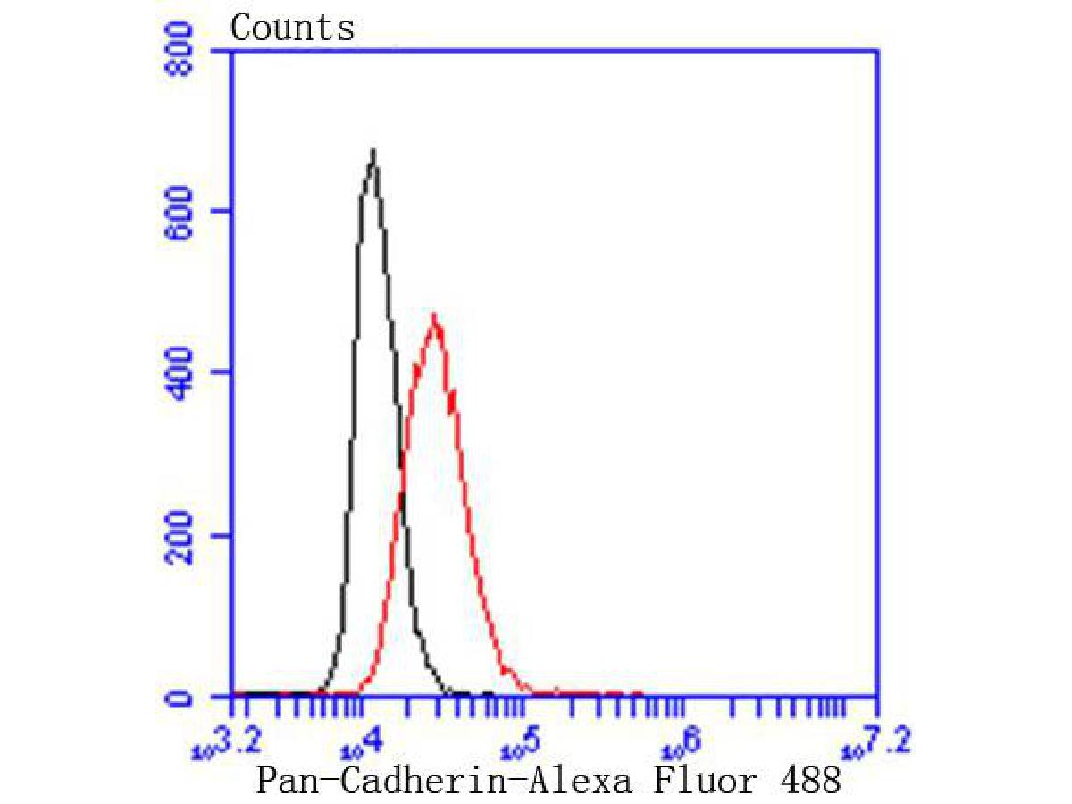 Flow cytometric analysis of Pan-Cadherin was done on Hela cells. The cells were fixed, permeabilized and stained with the primary antibody (ET1609-70, 1/50) (red). After incubation of the primary antibody at room temperature for an hour, the cells were stained with a Alexa Fluor 488-conjugated Goat anti-Rabbit IgG Secondary antibody at 1/1000 dilution for 30 minutes.Unlabelled sample was used as a control (cells without incubation with primary antibody; black).