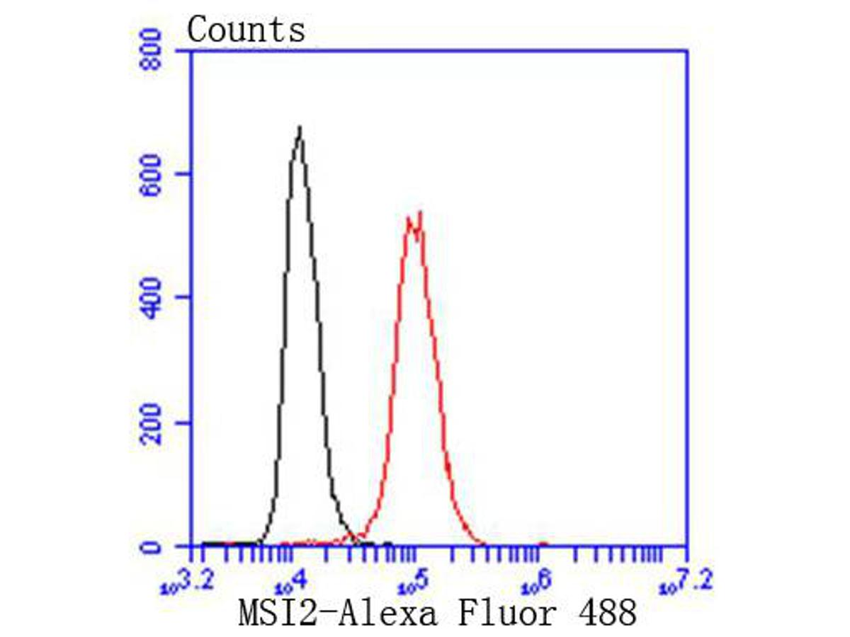Flow cytometric analysis of Hela cells with MSI2 antibody at 1/50 dilution (red) compared with an unlabelled control (cells without incubation with primary antibody; black). Alexa Fluor 488-conjugated goat anti rabbit IgG was used as the secondary antibody.