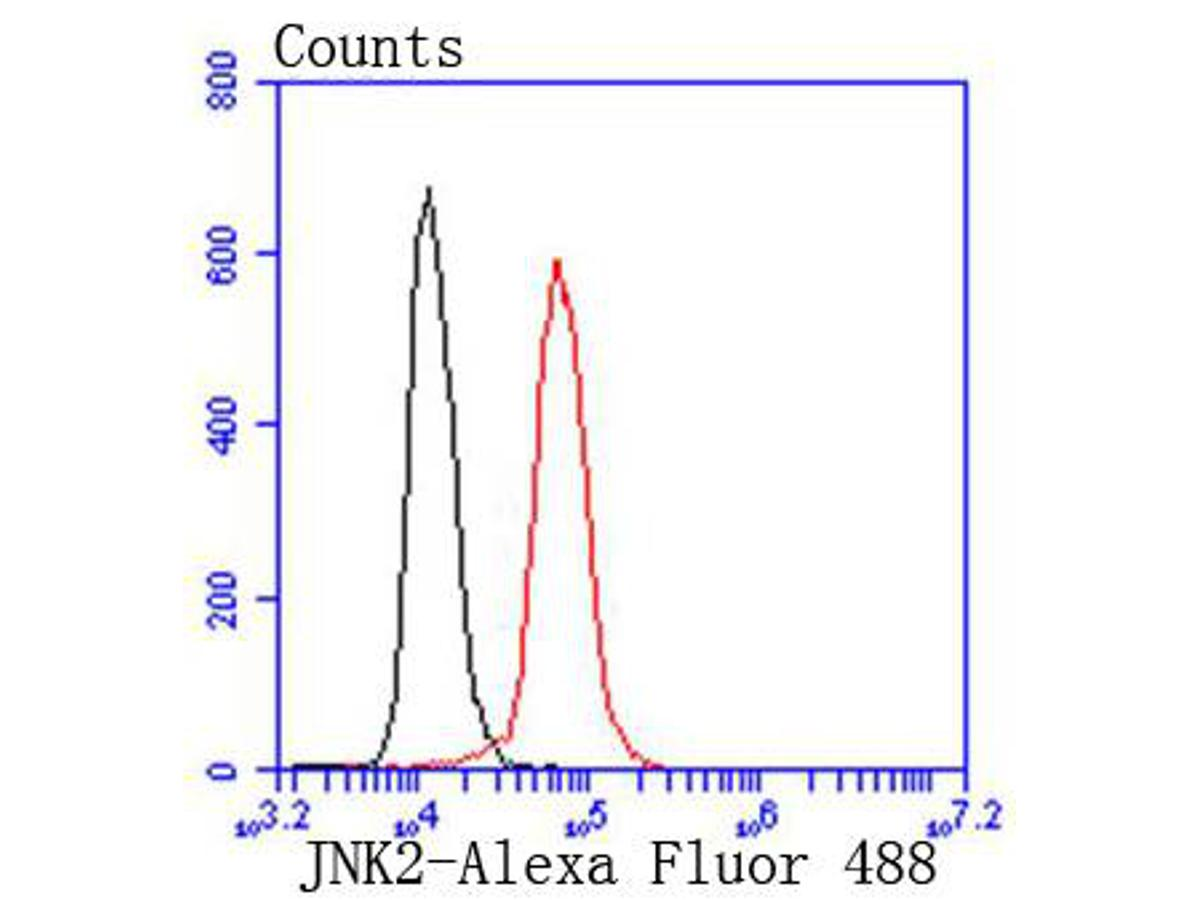 Flow cytometric analysis of JNK2 was done on Hela cells. The cells were fixed, permeabilized and stained with the primary antibody (ET1610-11, 1/50) (red). After incubation of the primary antibody at room temperature for an hour, the cells were stained with a Alexa Fluor 488-conjugated Goat anti-Rabbit IgG Secondary antibody at 1/1000 dilution for 30 minutes.Unlabelled sample was used as a control (cells without incubation with primary antibody; black).