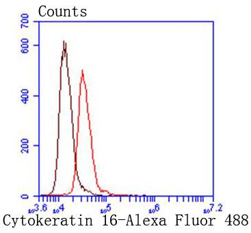 Flow cytometric analysis of Cytokeratin 16 was done on HepG2 cells. The cells were fixed, permeabilized and stained with the primary antibody (ET1610-17, 1/50) (red). After incubation of the primary antibody at room temperature for an hour, the cells were stained with a Alexa Fluor 488-conjugated Goat anti-Rabbit IgG Secondary antibody at 1/1000 dilution for 30 minutes.Unlabelled sample was used as a control (cells without incubation with primary antibody; black).