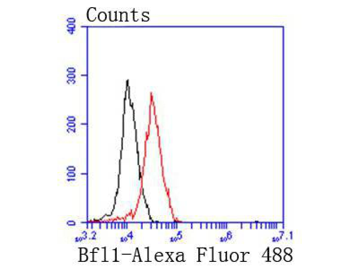 Flow cytometric analysis of BCL2A1 was done on 293 cells. The cells were fixed, permeabilized and stained with the primary antibody (ET1610-20, 1/50) (red). After incubation of the primary antibody at room temperature for an hour, the cells were stained with a Alexa Fluor 488-conjugated Goat anti-Rabbit IgG Secondary antibody at 1/1000 dilution for 30 minutes.Unlabelled sample was used as a control (cells without incubation with primary antibody; black).