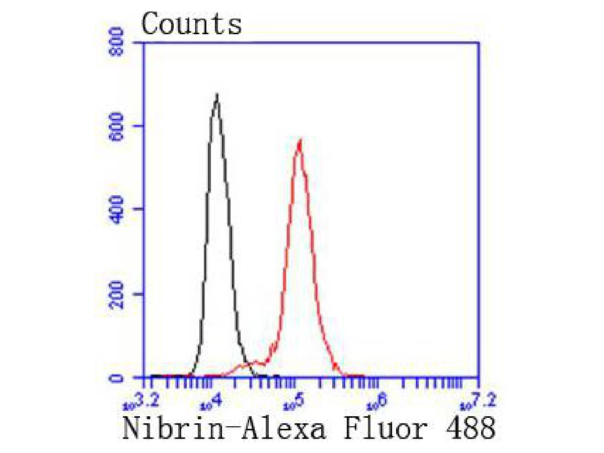 Flow cytometric analysis of Hela cells with p95 NBS1antibody at 1/50 dilution (red) compared with an unlabelled control (cells without incubation with primary antibody; black). Alexa Fluor 488-conjugated goat anti rabbit IgG was used as the secondary antibody.