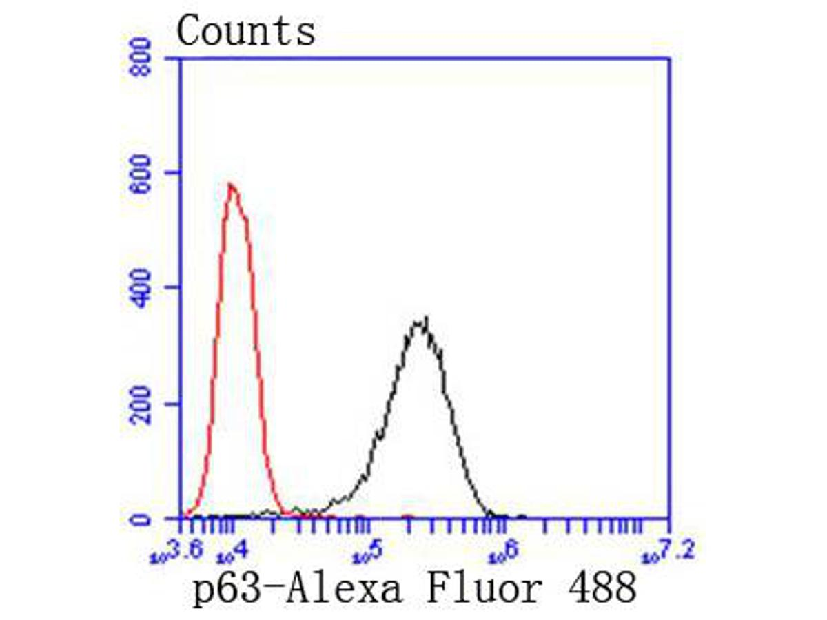 Flow cytometric analysis of p63 was done on A431 cells. The cells were fixed, permeabilized and stained with the primary antibody (ET1610-44, 1/50) (red). After incubation of the primary antibody at room temperature for an hour, the cells were stained with a Alexa Fluor 488-conjugated Goat anti-Rabbit IgG Secondary antibody at 1/1000 dilution for 30 minutes.Unlabelled sample was used as a control (cells without incubation with primary antibody; black).