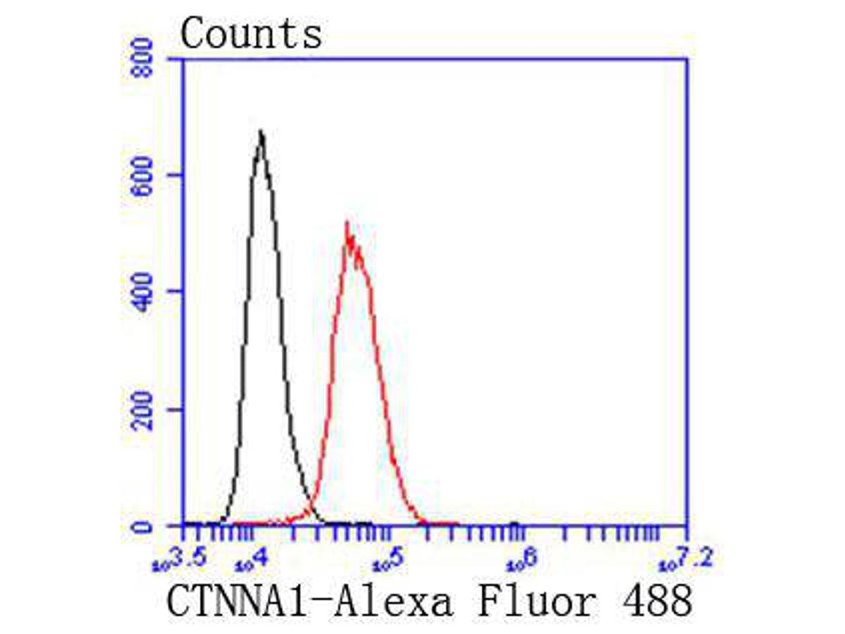 Flow cytometric analysis of Hela cells with alpha 1 Catenin antibody at 1/50 dilution (red) compared with an unlabelled control (cells without incubation with primary antibody; black). Alexa Fluor 488-conjugated goat anti rabbit IgG was used as the secondary antibody.