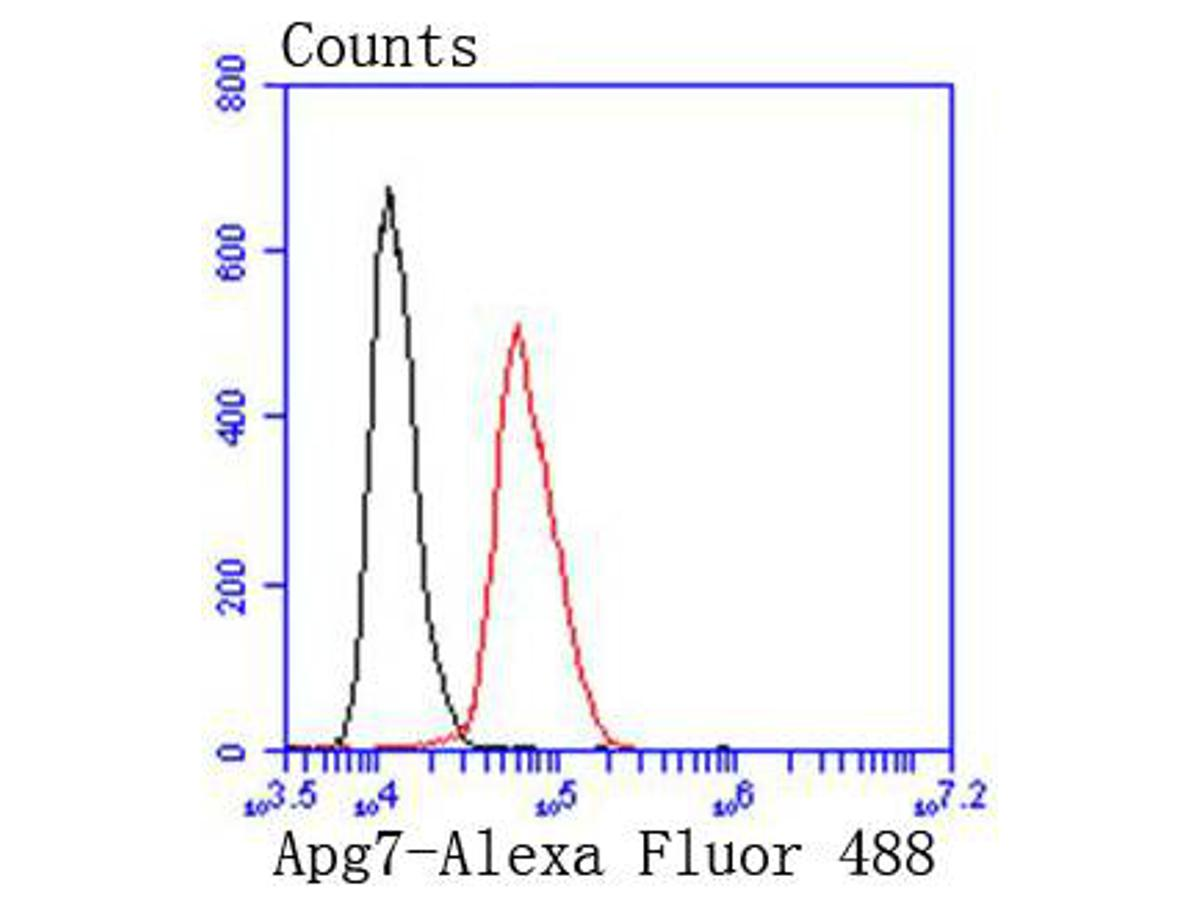Flow cytometric analysis of Apg7 was done on Hela cells. The cells were fixed, permeabilized and stained with the primary antibody (ET1610-53, 1/50) (red). After incubation of the primary antibody at room temperature for an hour, the cells were stained with a Alexa Fluor 488-conjugated Goat anti-Rabbit IgG Secondary antibody at 1/1000 dilution for 30 minutes.Unlabelled sample was used as a control (cells without incubation with primary antibody; black).