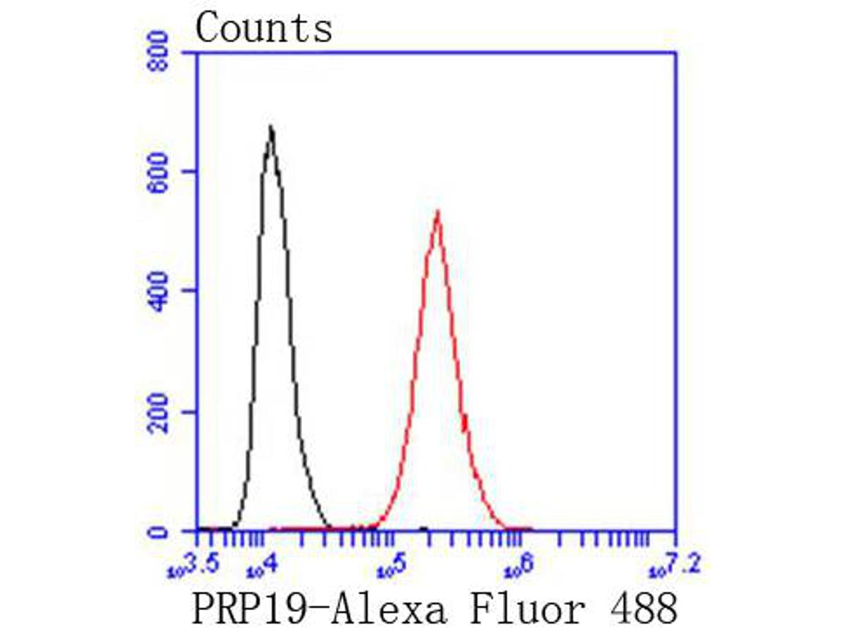 Flow cytometric analysis of Hela cells with PRP19 antibody at 1/50 dilution (red) compared with an unlabelled control (cells without incubation with primary antibody; black). Alexa Fluor 488-conjugated goat anti rabbit IgG was used as the secondary antibody.