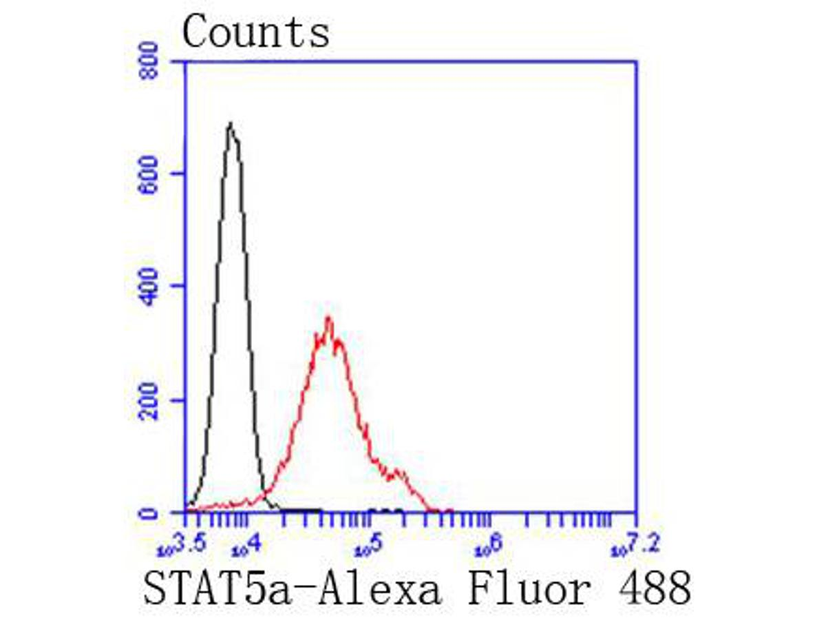 Flow cytometric analysis of Jurkat cells with STAT5a antibody at 1/50 dilution (red) compared with an unlabelled control (cells without incubation with primary antibody; black). Alexa Fluor 488-conjugated goat anti rabbit IgG was used as the secondary antibody.