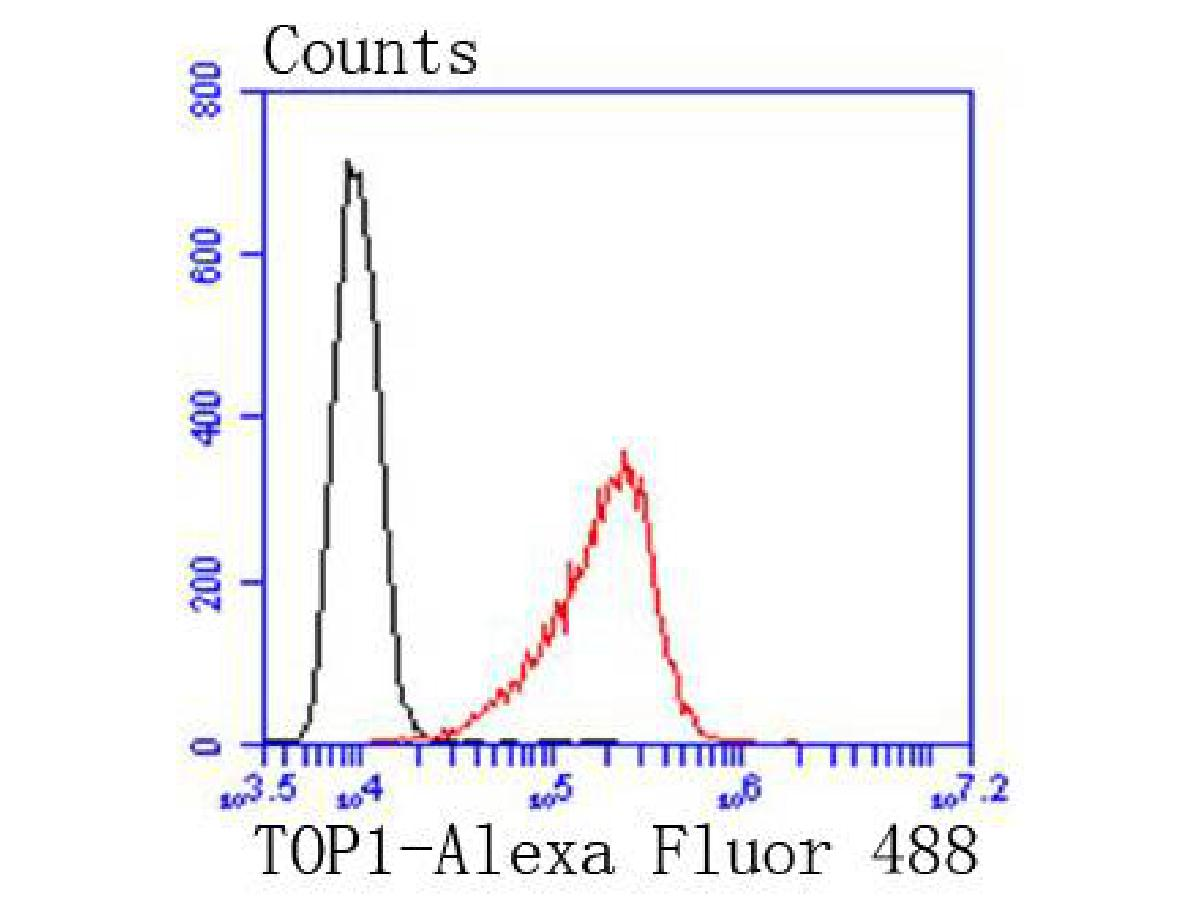 Flow cytometric analysis of HepG2 cells with TOP1 antibody at 1/50 dilution (red) compared with an unlabelled control (cells without incubation with primary antibody; black). Alexa Fluor 488-conjugated goat anti rabbit IgG was used as the secondary antibody
