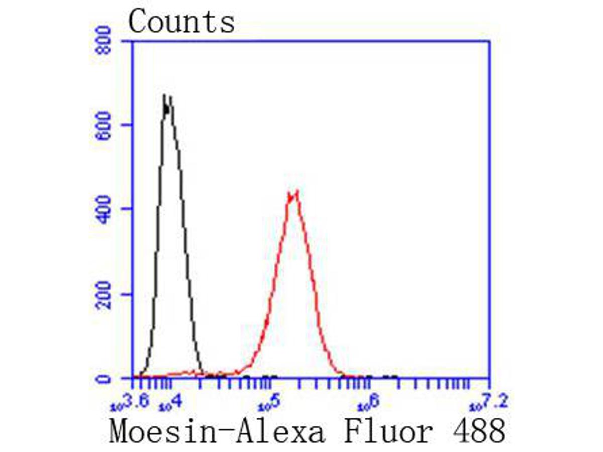 Flow cytometric analysis of Hela cells with Moesin antibody at 1/50 dilution (red) compared with an unlabelled control (cells without incubation with primary antibody; black). Alexa Fluor 488-conjugated goat anti rabbit IgG was used as the secondary antibody.