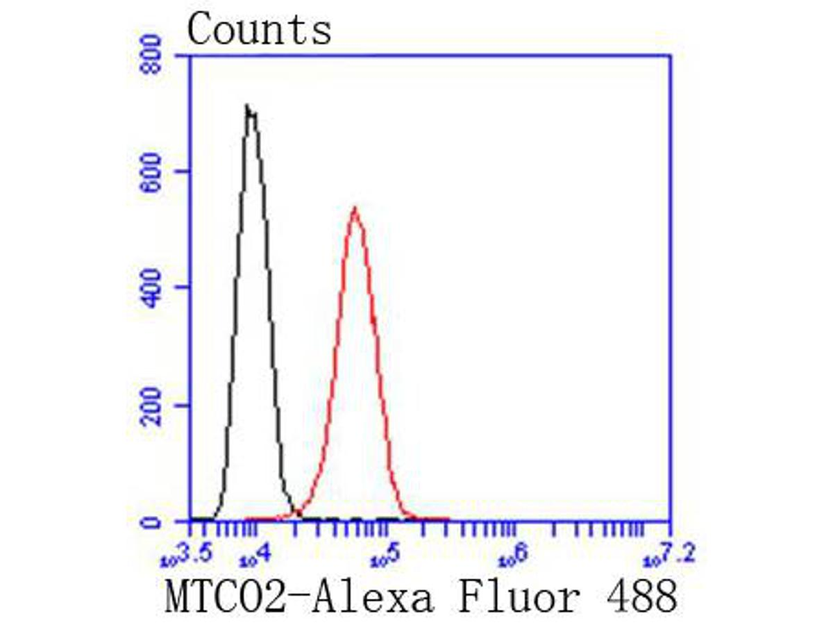 Flow cytometric analysis of MTCO2 was done on HepG2 cells. The cells were fixed, permeabilized and stained with the primary antibody (ET1610-72, 1/50) (red). After incubation of the primary antibody at room temperature for an hour, the cells were stained with a Alexa Fluor 488-conjugated Goat anti-Rabbit IgG Secondary antibody at 1/1000 dilution for 30 minutes.Unlabelled sample was used as a control (cells without incubation with primary antibody; black).