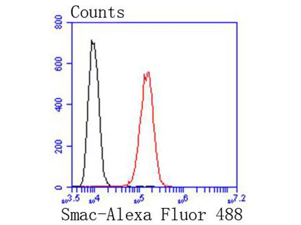 Flow cytometric analysis of HepG2 cells with DIABLO antibody at 1/50 dilution (red) compared with an unlabelled control (cells without incubation with primary antibody; black). Alexa Fluor 488-conjugated goat anti rabbit IgG was used as the secondary antibody.