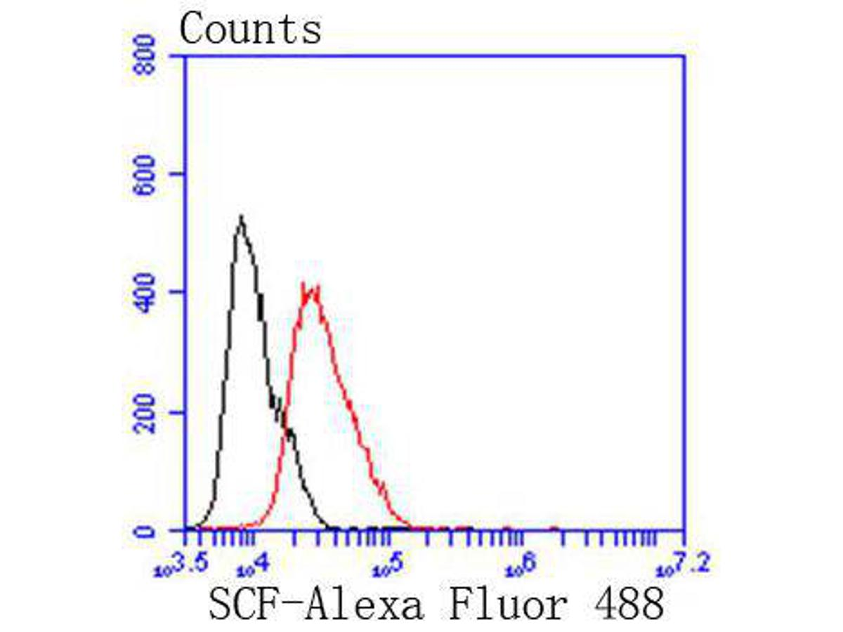 Flow cytometric analysis of MCF-7 cells with SCF antibody at 1/50 dilution (red) compared with an unlabelled control (cells without incubation with primary antibody; black). Alexa Fluor 488-conjugated goat anti rabbit IgG was used as the secondary antibody.