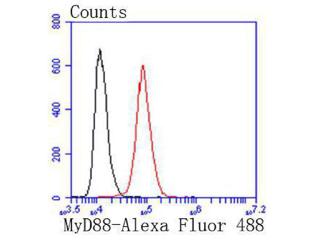 Flow cytometric analysis of MyD88 was done on Hela cells. The cells were fixed, permeabilized and stained with the primary antibody (ET1610-81, 1/50) (red). After incubation of the primary antibody at room temperature for an hour, the cells were stained with a Alexa Fluor 488-conjugated Goat anti-Rabbit IgG Secondary antibody at 1/1000 dilution for 30 minutes.Unlabelled sample was used as a control (cells without incubation with primary antibody; black).