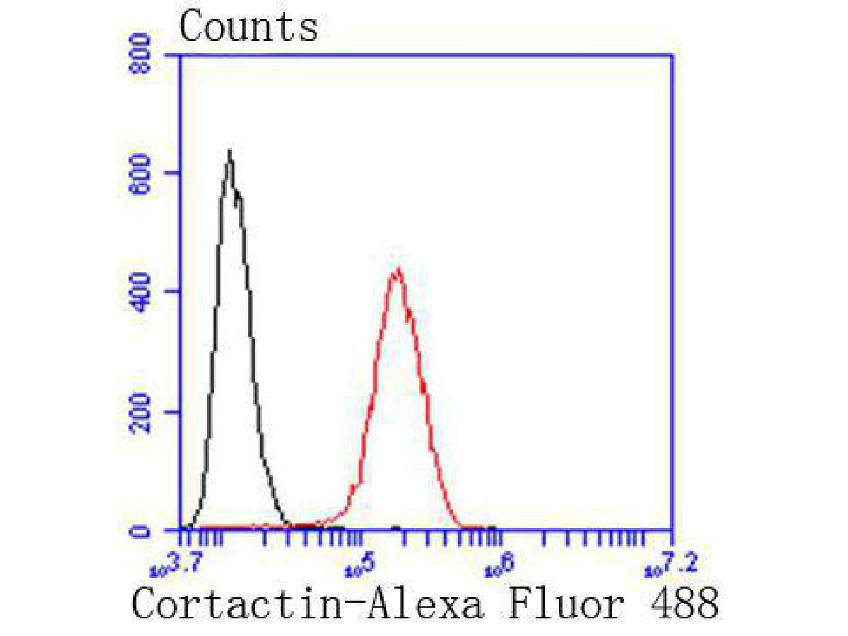 Flow cytometric analysis of Cortactin was done on Hela cells. The cells were fixed, permeabilized and stained with the primary antibody (ET1610-87, 1/50) (red). After incubation of the primary antibody at room temperature for an hour, the cells were stained with a Alexa Fluor 488-conjugated Goat anti-Rabbit IgG Secondary antibody at 1/1000 dilution for 30 minutes.Unlabelled sample was used as a control (cells without incubation with primary antibody; black).