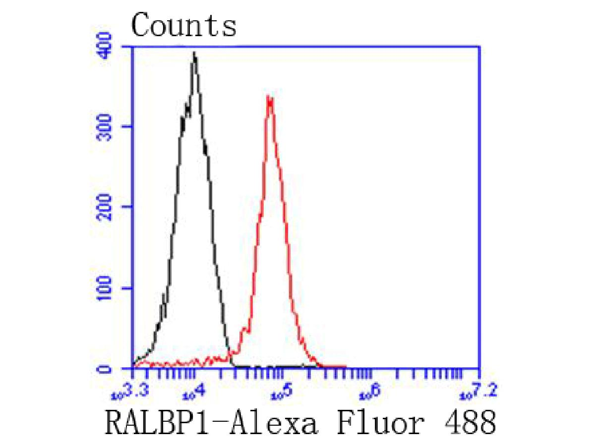 Flow cytometric analysis of 293 cells with RALBP1 antibody at 1/50 dilution (red) compared with an unlabelled control (cells without incubation with primary antibody; black). Alexa Fluor 488-conjugated goat anti rabbit IgG was used as the secondary antibody.
