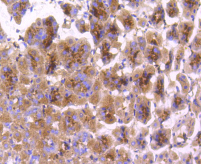 Flow cytometric analysis of COX1/Cyclooxygenase 1 was done on Hela cells. The cells were fixed, permeabilized and stained with the primary antibody (ET1610-98, 1/50) (red). After incubation of the primary antibody at room temperature for an hour, the cells were stained with a Alexa Fluor 488-conjugated Goat anti-Rabbit IgG Secondary antibody at 1/1000 dilution for 30 minutes.Unlabelled sample was used as a control (cells without incubation with primary antibody; black).